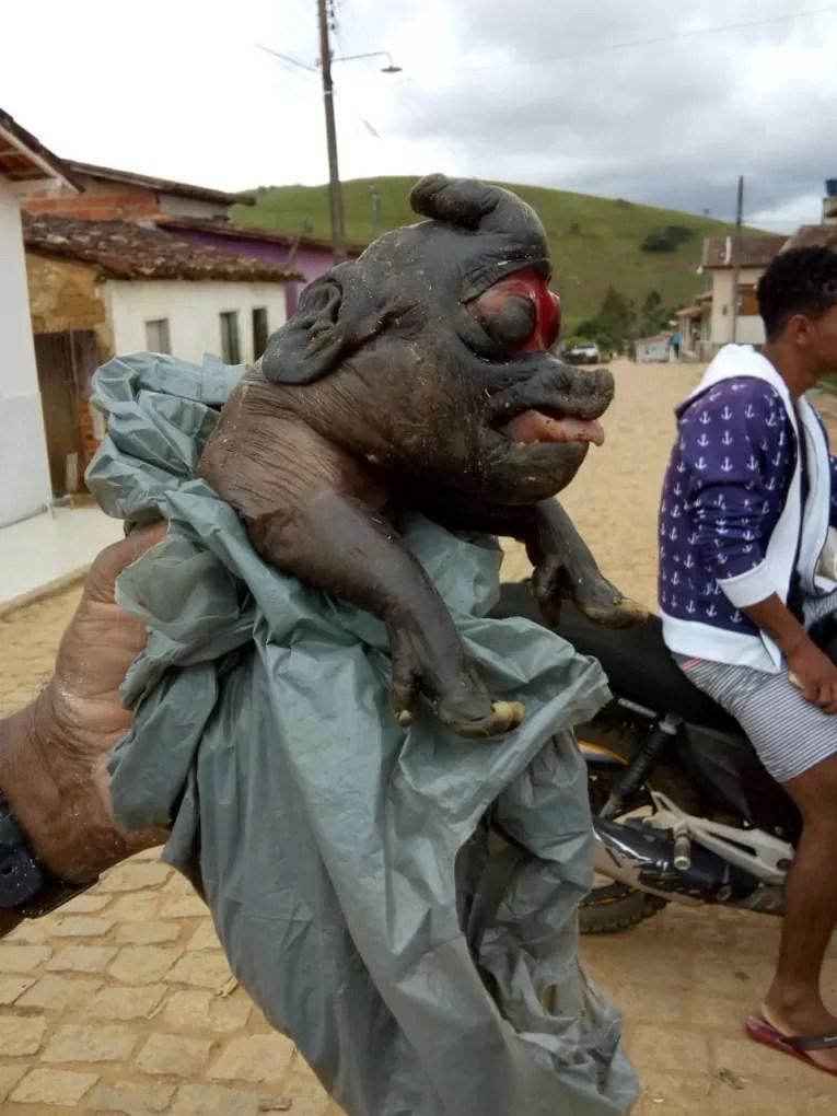 Filhotes de porco nascem com características estranhas no interior da Bahia