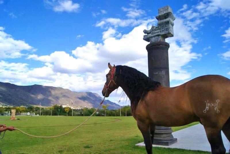 jocotepec caballo