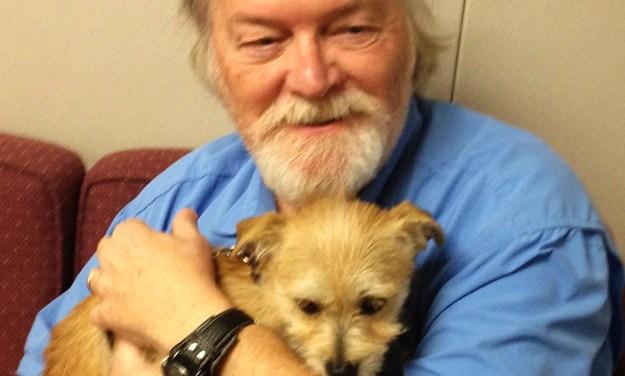 Adopt Leah: A Sweet Terrier
