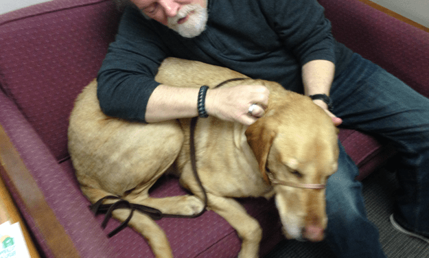 Adopt Art: A Gentle Giant Lab Mix