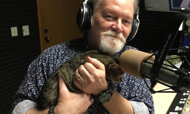 Adopt Kitten Lil: A Perfect Lap Cat
