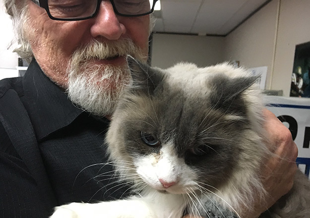 Adopt Flurry: The Large Lovable Cat