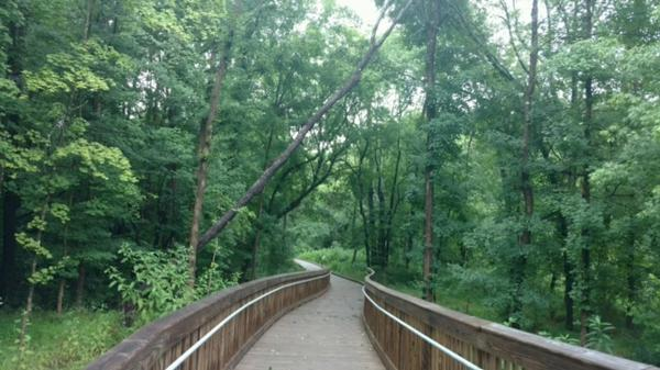 Hillsborough Riverwalk Reopens After Dead Tree Removal