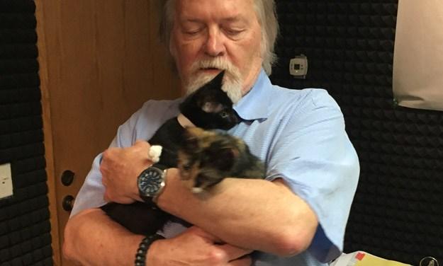 Adopt Anastasia and Jasmine: A Couple of Disney Kittens