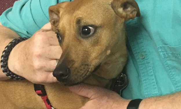 Adopt Sample: The Feist Puppy