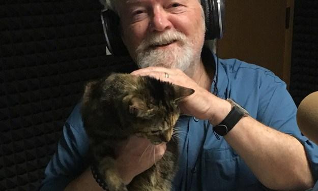 Adopt Cally: A Sweet Tabby