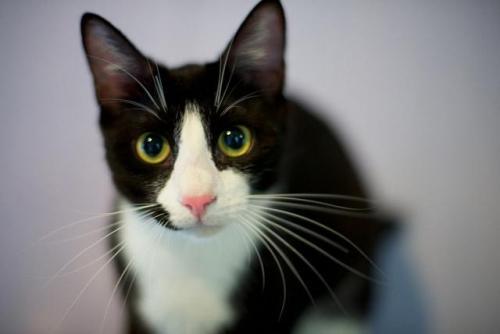 Adopt-A-Pet: Kiska