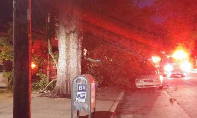 Downtown Chapel Hill Loses Large Tree to Strong Weekend Storm