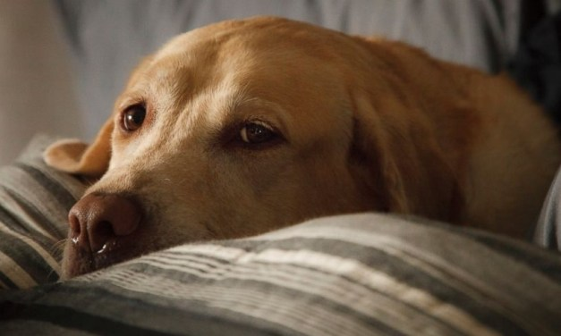 Canine Influenza Outbreak Reported In North Carolina