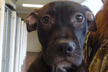 Adopt Wilbur: A Shy Sweetheart