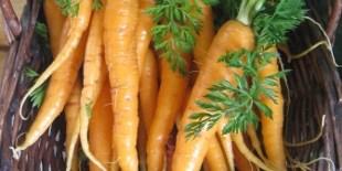 Pittsboro Farmer's Market Kicks-Off Thursday, Moves To New Location