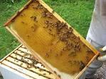 Bee hive frame