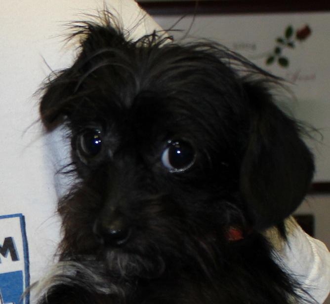 Adopt Ricky: A Tiny Treasure