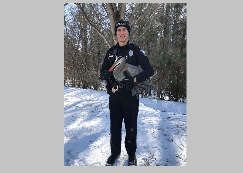 Carrboro Police Officer Saves Animal From Ice