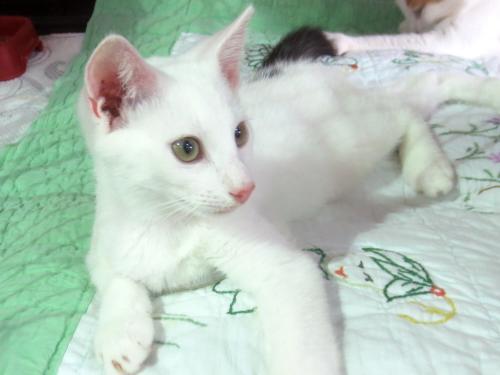Adopt-A-Pet: Spot