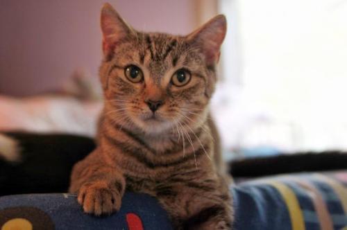 Adopt-A-Pet: Lee