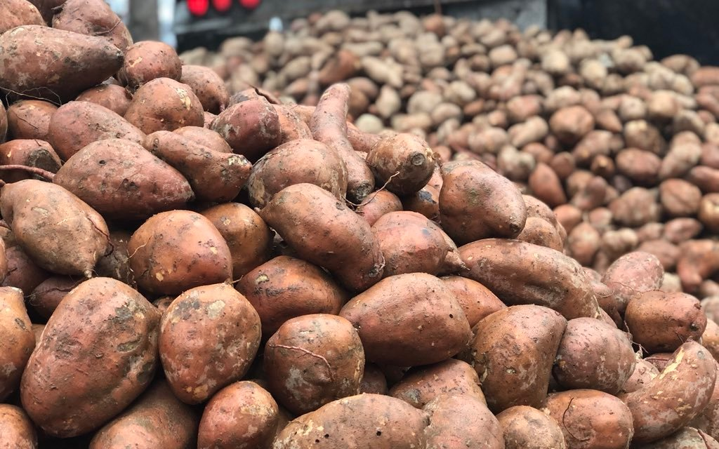 Ex-NFL Player Gifts 20 Tons of Sweet Potatoes for 'Yam Jam'