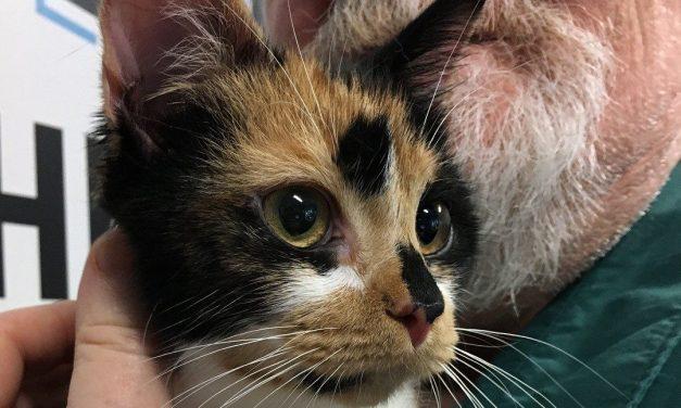 Adopt-A-Pet: Smores