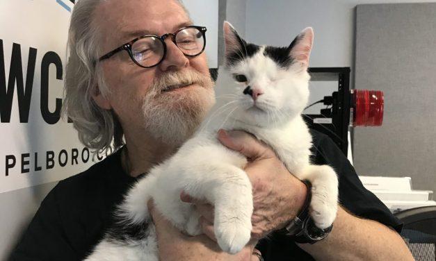Adopt-A-Pet: Pete