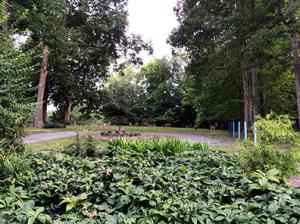 Barbara Clare's Garden