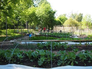 Carolina Campus Community Garden