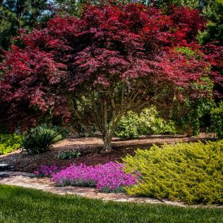 """2nd place - Russell Niemi - """"Japanese Maple"""""""
