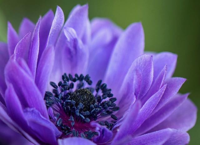 HIGH Res Flower.Kathy Swendiman copy