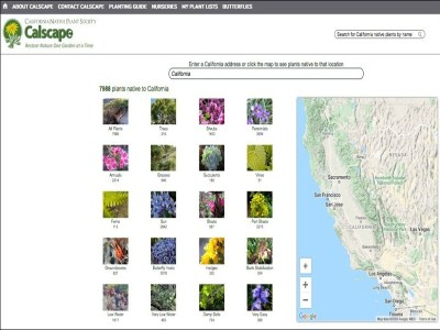 Calscape home page - series of images of plants, each representing a grouping of plants, such as trees, easy plants, etc. Each images is labeled with the group of plants it represents and the number of plants in that group.