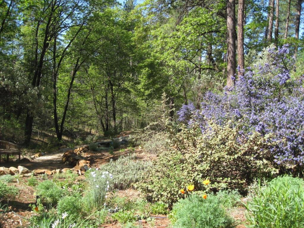 in foreground, landscape of native platns, includiing purple ceanothus in cloom, orange California poppies, and native lilies; in background, native forest of pines and oaks