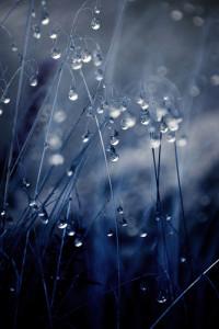 rain3-200x300