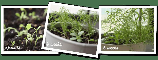wildflower seed paper growing progress