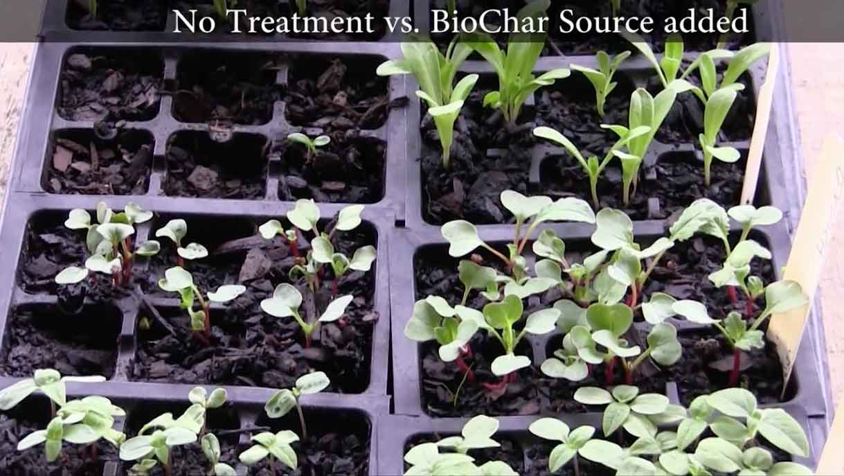 biochar source growing trial with and without still1b