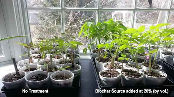 biochar impact chargrow growing trial