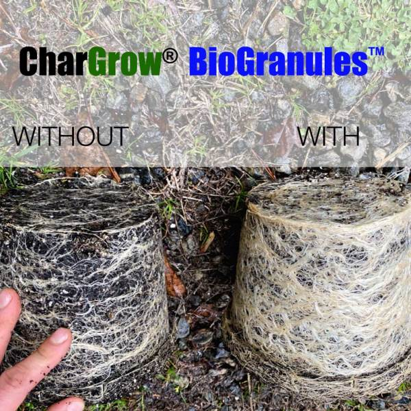 Hemp growing trials with CharGrow BioGranules showing improved root development