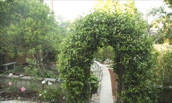 Terrill_garden6_600px