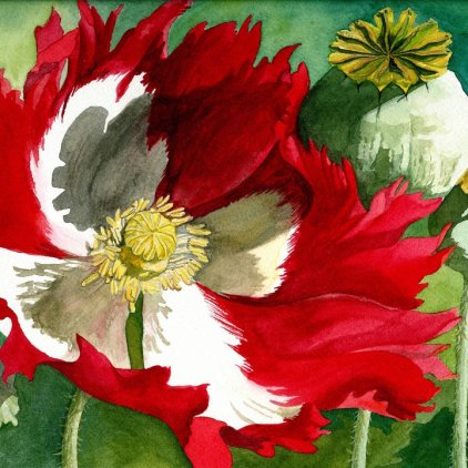 Red Cross Poppy Archival Print (Watercolor)