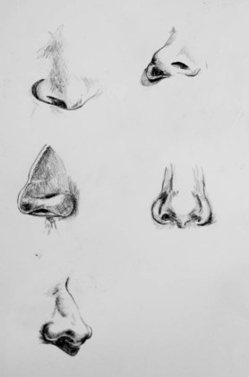 pencil drawing noses