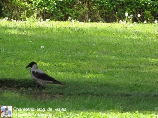 Estos cuervitos nos los encontramos durante todo el viaje, o sea no son cuervos negros son una especie similar pero no son cuervos exactamente