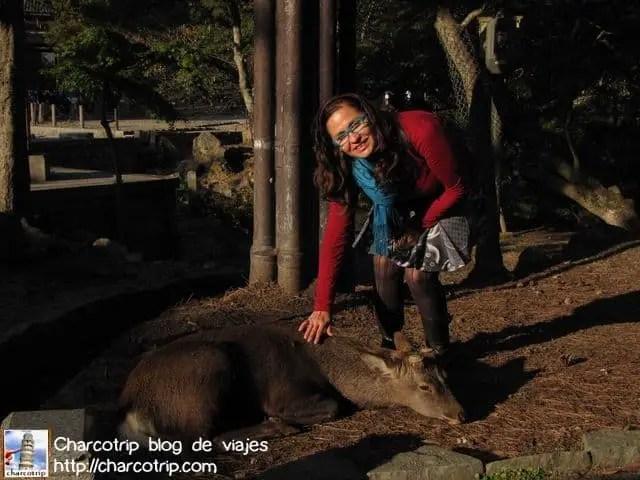 """Olga """"la querendona de los animales"""" (aquí vemos un venado que de plano ya no opuso ninguna resistencia, fue mejor para sus oidos)"""
