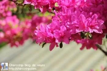 Azaleas en el Jardin Secreto
