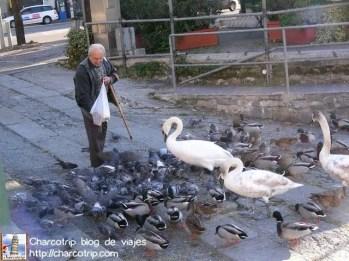 Senor alimentando aves en Como