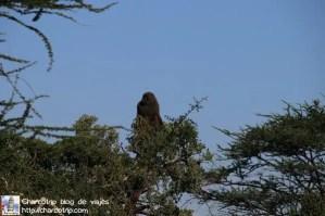 babuino-arbol