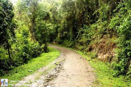 camino-cocora
