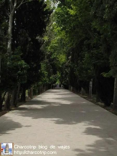 Camino con arboles
