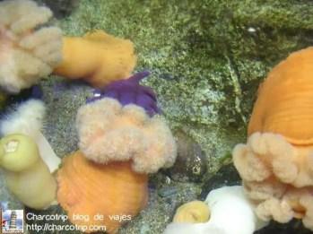 corales-biodome