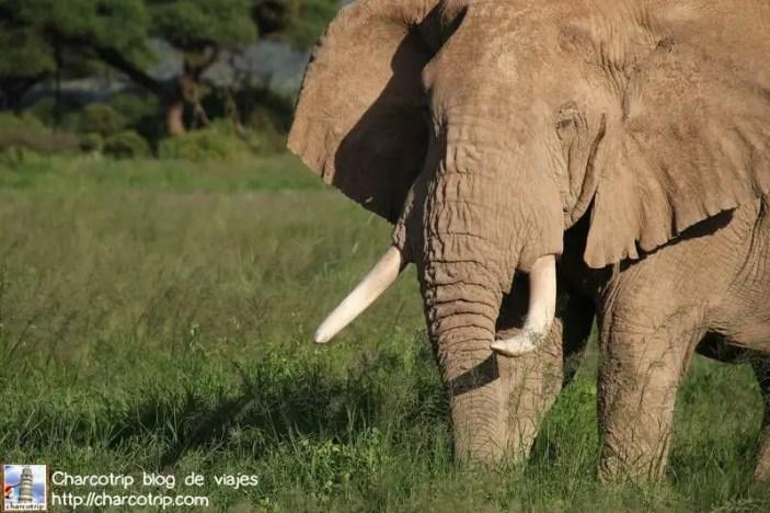 elefante21