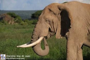 elefante23