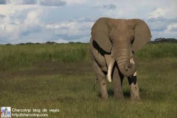 elefante33