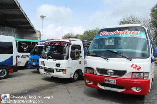 Autobuses pereiranos