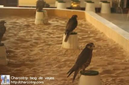 Falcones
